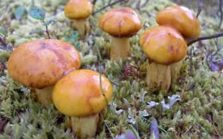 Как почистить грибы маслята видео. Как быстро почистить маслята
