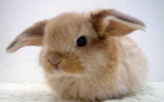 Как назвать серого кролика. Какой кличкой назвать кролика?