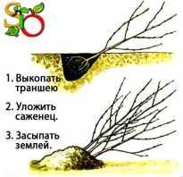 Абрикос осенний. Подготовка абрикоса к зиме – правильный осенний уход за южным деревом