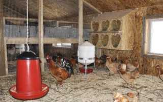 В какое время года несутся куры. Причины прекращения яйцекладки у кур зимой и осенью