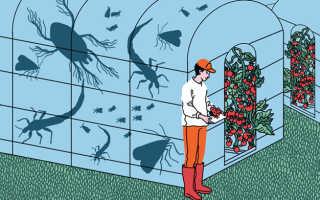 Биозащита и биобезопасность.