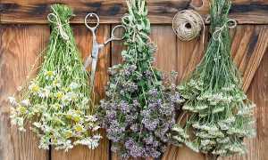 Как хранить сушеные травы. 10 лучших способов сохранить пряные травы