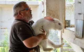 Видео правильный убой кролика. Как правильно произвести забой и разделку кроликов в домашних условиях