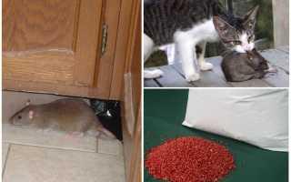 Как вывести крыс из сарая народными средствами. Как избавиться от крыс в сарае?