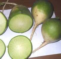 Зеленая редька выращивание и уход. Как выращивается редька морозоустойчивая зеленая?