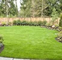 Как посадить газон своими руками видео. Как сажать газонную траву: Технология посадки, уход за газоном