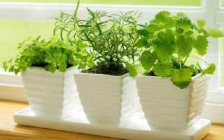 Йод для комнатных растений как подкормка. Йод для комнатных растений как подкормка: свойства и применение