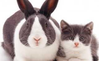 Декоративные кролики и кошки. Кот и кролик в одном доме: как подружить питомцев?
