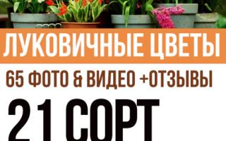 Виды луковиц цветов фото. Садовые луковичные цветы: фото, названия и вредители