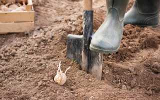 Как сажать картошку под лопату. Как сажать картошку под лопату?