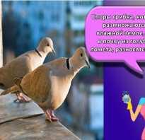Как отпугнуть воробьев с балкона. Как избавиться от птиц на крыше дома и балкона?