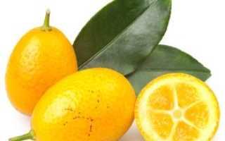 Какой фрукт по другому называется фортунелла.