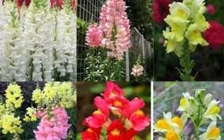 Какие цветы можно посеять в июне. Какие виды цветов можно сажать в июне?
