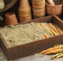 Как пересыпать морковь песком. Как хранить морковь в домашних условиях: 10 способов