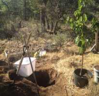 Где сажать вишню на садовом участке. Место посадки вишни на участке