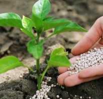 Азофоска удобрение применение осенью. Азофоска: применение удобрения на огороде весной, отзывы