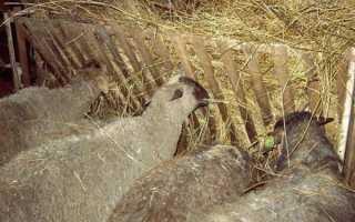 Бараний навоз. Как удобрять огород овечьим навозом