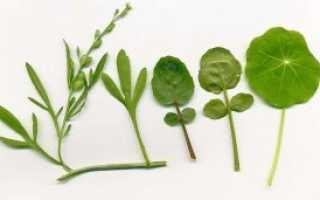 Зелень цицмат. Кресс-салат (садовый кресс, перечник, перечная трава, цицмат, критский салат)