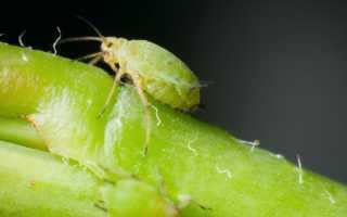 Зеленое хозяйственное мыло. зеленое хозяйственное мыло 72