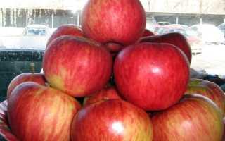 Алматинские яблоки. Апорт (сортотип яблони)