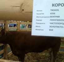 Клички коровам список. Клички коров: особенности и классификация