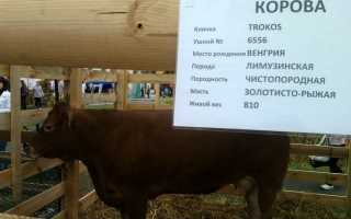 Имена для бычков. Выбор клички для коровы