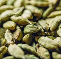 Как размолоть кардамон. Что такое кардамон и всё, что нужно знать о его полезных свойствах и применении в кулинарии