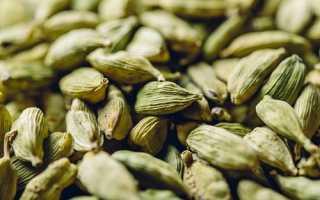 Кардамон фото семена. Полезные свойства кардамона и правильное применение в кулинарии