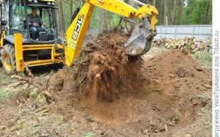 Как избавиться от корней клена на участке. Как избавиться от клена на участке?
