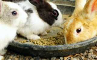 Когда отсаживать крольчат от матери. В каком возрасте отсаживают крольчат от крольчихи?