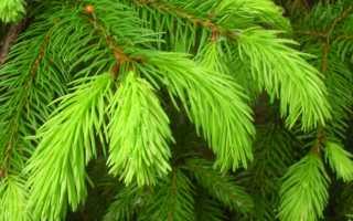 Как ускорить рост можжевельника. Какие удобрения нужны хвойным растениям?