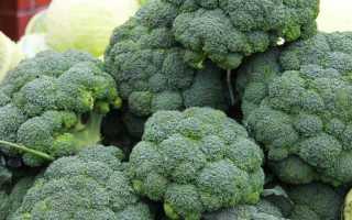 Как правильно разделать брокколи. Как правильно готовить брокколи?