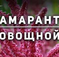 Амарант овощной фото. Амарант: сорта и виды с фото и описанием