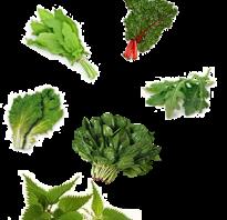 Зеленые овощи список. Темно зеленые овощи список