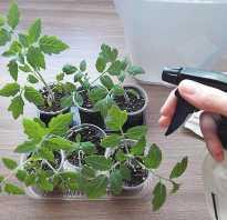 Как фитоспорином обработать почву. Как правильно развести фитоспорин, чтобы обработать землю перед осенними посадками?