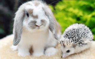Какие крупы можно декоративным кроликам. Питание декоративных кроликов: чем можно кормить, а чем нельзя