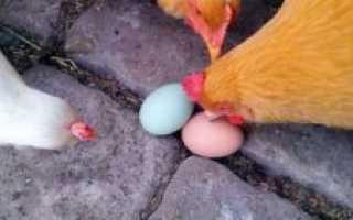 Классификация яиц по категориям. Категории яиц куриных: чем отличаются, какие выбрать
