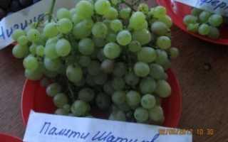 Виноград память шатилова. Сорт винограда Памяти Шатилова