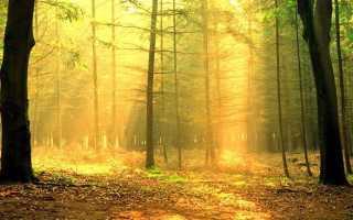 Деревья долгожители названия и возраст таблица. Деревья долгожители названия и возраст таблица