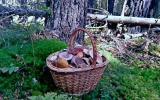 Где собирают грибы в волгограде. Самые грибные места Волгоградской и других областей России