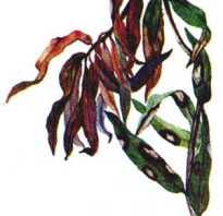 Болезни лилий и борьба с ними. Как защитить лилии от болезней и вредителей, способы лечения