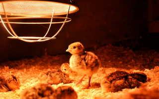 Как сделать отопление в курятнике. Как обогреть курятник зимой