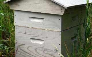 Как называется пчелиный дом. Пчелиный дом