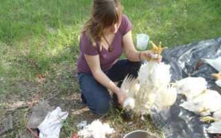 Как опалить курицу в домашних условиях. Как правильно опалить курицу