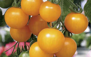 Желтые помидоры польза и вред. Желтые и красные помидоры: лучшие сорта, польза и вред