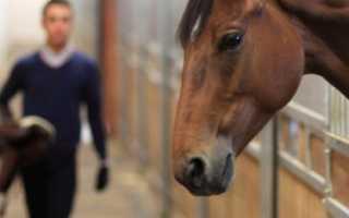 Как ухаживать за лошадьми. Особенности ухода за лошадьми: кормление, содержание