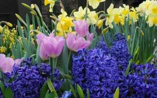 Виды луковичных цветов для сада. Как вырастить красочные луковичные цветы