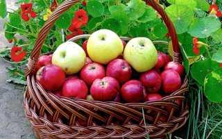Выращивание яблонь в подмосковье. Лучшие сорта яблонь для Подмосковья и других районов средней полосы