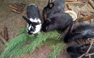 Какие ветки можно кроликам. Ветки каких деревьев можно давать кроликам летом и зимой?