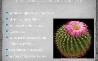 Кактус для чего полезен. Чем полезен кактус в доме?